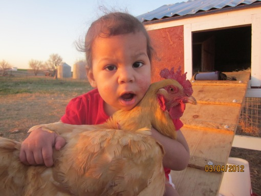 Elisabeth's Chicken 2 (2)